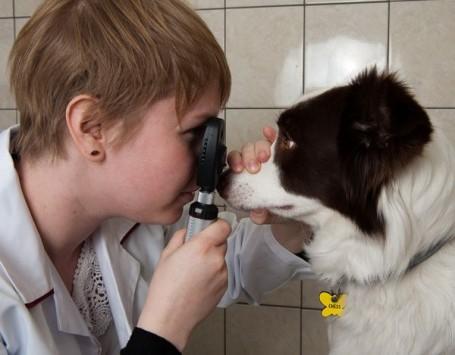 oftalmoskopia bezposrednia